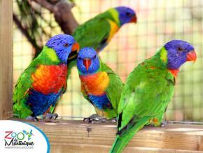 Ouverture du zoo de Martinique pour les vacances de Pâques